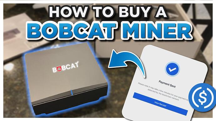 buy a bobcat2